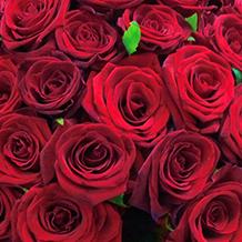 Роза - королева цветочного царства. Все о розах   BuketLand
