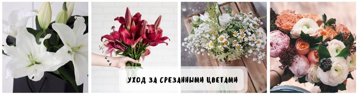 Уход за срезанными цветами дома